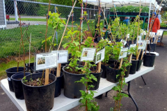 plant-sale
